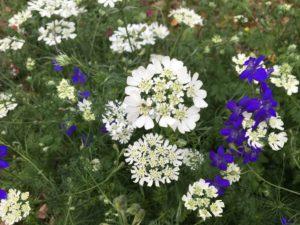 ハーブのお花