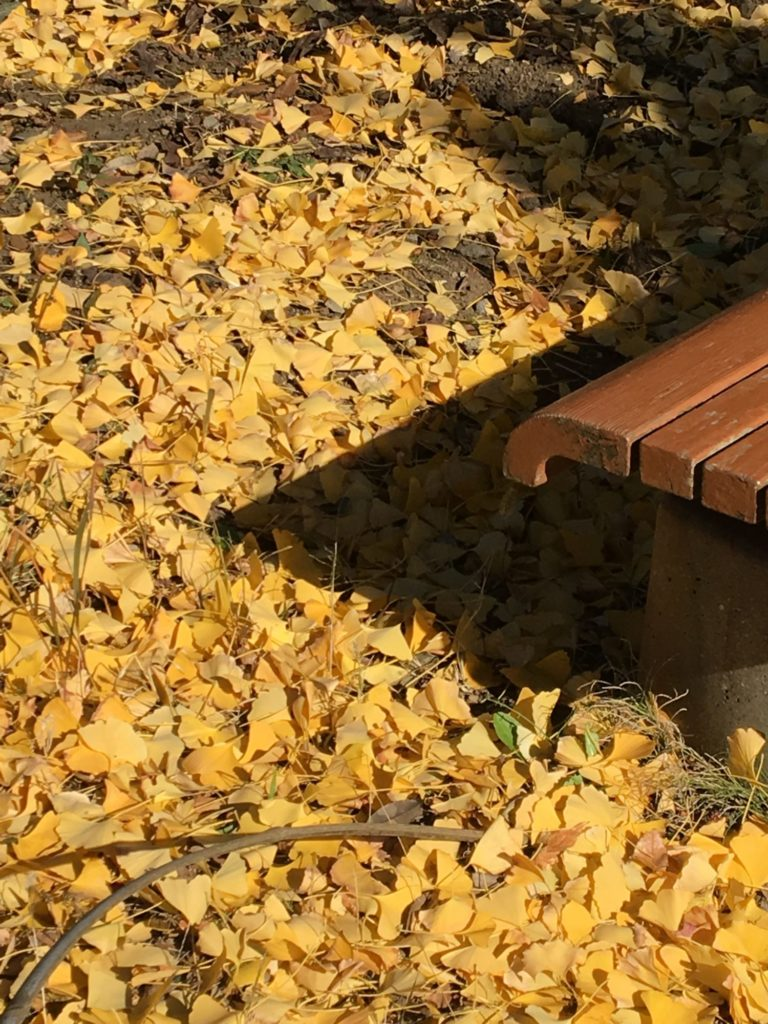 黄落とベンチ
